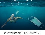 Small photo of A sea turtle going to eat a surgical mask