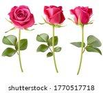 set of decorative realistic... | Shutterstock .eps vector #1770517718