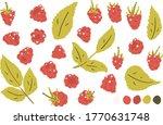 Raspberry  Raspberry Leaf...