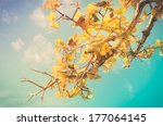 tree and sky in countryside or... | Shutterstock . vector #177064145