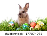 Easter Bunny And Easter Eggs O...