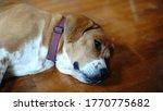 beagle dog sleeping on wood... | Shutterstock . vector #1770775682