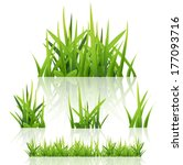 green grass nature  vector  | Shutterstock .eps vector #177093716