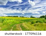 Agriculture field - stock photo