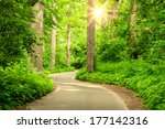 forest road | Shutterstock . vector #177142316