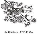 linden   Shutterstock .eps vector #177146516
