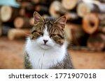 Cute Tabby Cat Sitting In Farm...