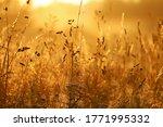 Golden Sunrise Over Tall Grass  ...