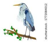 Blue Heron On Tree Branch...