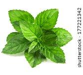 fresh mint isolated on white... | Shutterstock . vector #177221342