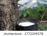 close up on rubber latex...   Shutterstock . vector #1772259278