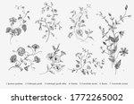 vintage vector botanical... | Shutterstock .eps vector #1772265002