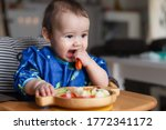 Small photo of Baby boy eating finger food and mix vegetable plate.Baby led weaning (BLW) self feeding.mixed race Asian-German infant biting carrot on high chair at home. Cute little child with solid nutrition.