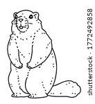 Marmot. Vector Line Art...