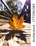 Autumn Leaf On A Bridge During...