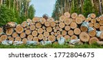 A Stack Of Logs With Deciduous...