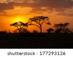 Silhouette Of Acacia Trees At...
