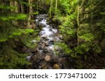 Forest river creek water flow. River creek in forest. Deep forest river creek flowing. River creek in deep forest