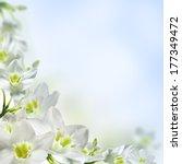 white flowers on a light blue... | Shutterstock . vector #177349472