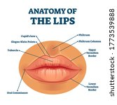 anatomy of lips with detailed... | Shutterstock .eps vector #1773539888