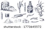 hand drawn sugar cane. sketch... | Shutterstock .eps vector #1773645572