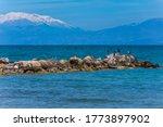 Cormorants Stand On Beach Rock...