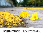 The Flowers Multiply Yellow O...