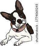 Dog Boston Terrier Vector...