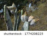 A Photo Of Damaged Leaves And...