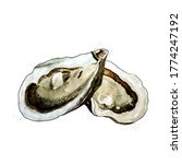 Oyster  Watercolor Isolated...