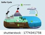 Diagram Of Sulfur Cycle ...