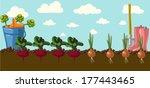 stylized vegetables set ...   Shutterstock .eps vector #177443465