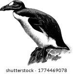 the great auk is a flightless... | Shutterstock .eps vector #1774469078