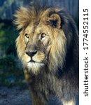 Portrait Of A Beautiful Big...