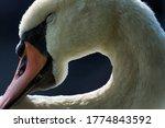Close Up Of A White Male Mute...