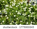 Green Plants With White Flower...