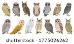 owl bird cartoon vector set... | Shutterstock .eps vector #1775026262