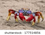 Big  Different Colors Crab Fro...