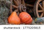 Different Varieties Of Pumpkin...