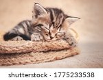 Tabby Kitten Cute Sleeping In A ...