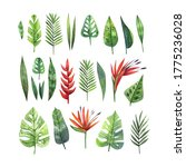 watercolor set of tropical... | Shutterstock . vector #1775236028
