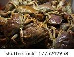 Rock Crab Aka Stone Crab. Live...