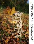 Halloween. Rat Skeleton With...