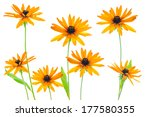 Various Flower Yellow...