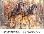 Amish Work Horses Logging Trees ...