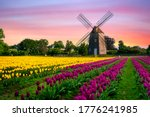 Windmill In Beautiful Color...