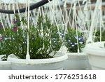 Flower Seedlings In Hanging...