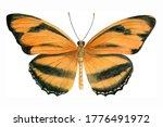 Watercolor Orange Tropical...