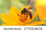 Bee Looking For Pollen Flying...