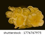 Yellow Tulip Flowers Drawn With ...
